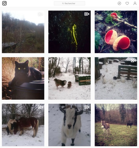 LSA2018-02_Instagram2